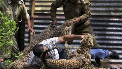 В Индии леопард растерзал 13 человек