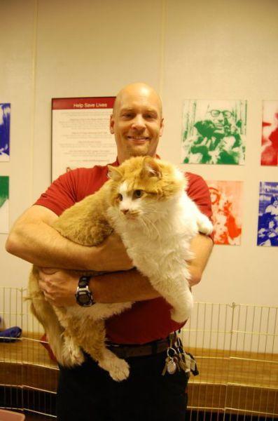 Новый самый жирный кот Америки