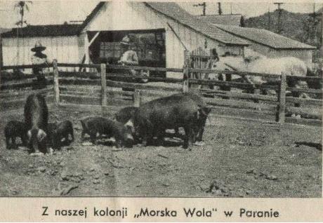 Польская колониальная империя