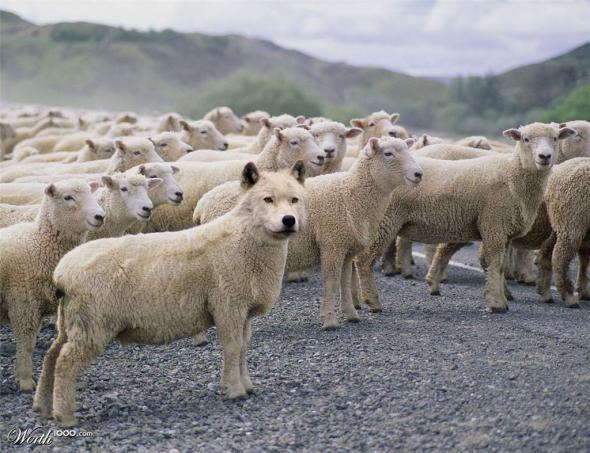 Сказки для стада.