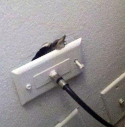 Нежданный гость проник в квартиру через розетку
