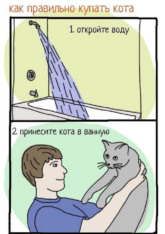 Инструкция: как правильно купать кота