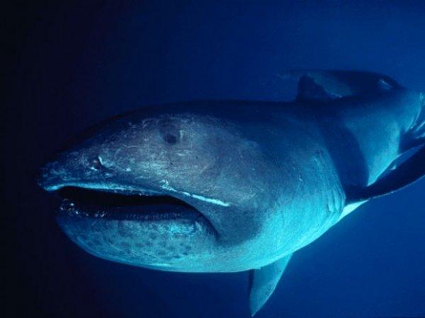 10 самых страшных акул