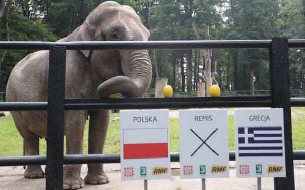 Евро-2012: Кто станет преемником осьминога Пауля?
