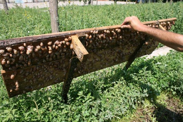 Ферма по выращиванию улиток