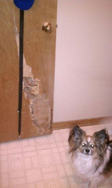 Озверевшие звери крушат квартиры!