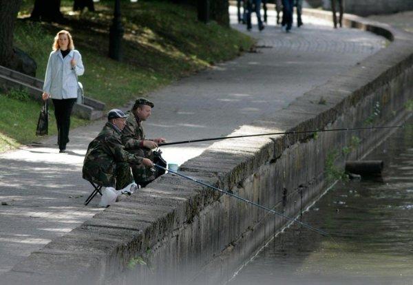 Минские власти планируют возобновить зарыбление Свислочи