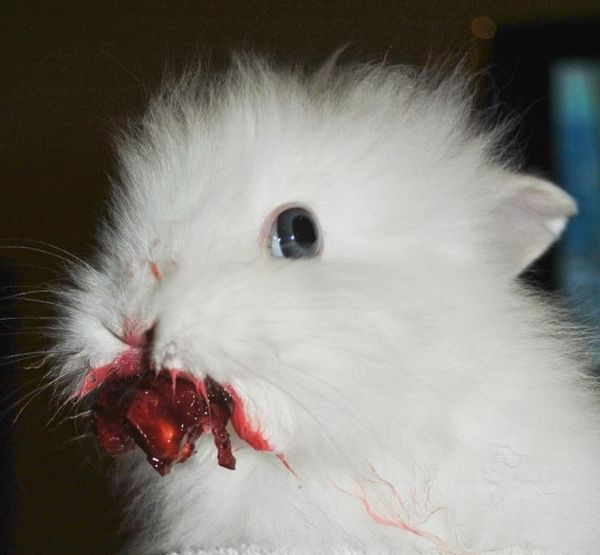 Вишенка и кролик - такие милашки!