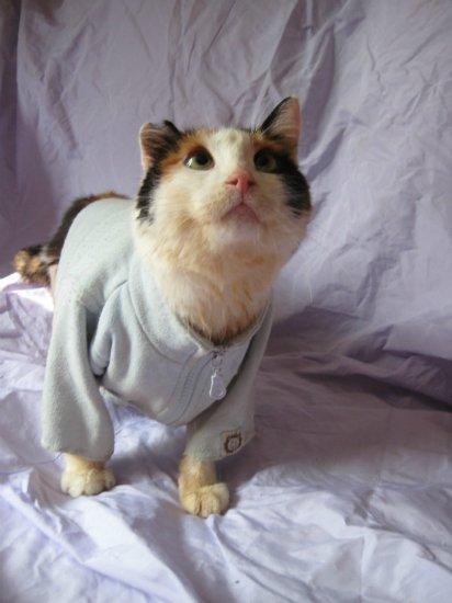 Про кошку и животных