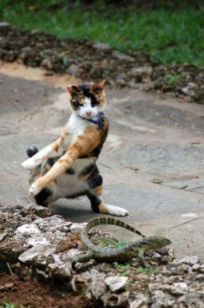 Вовремя сделанные фото котов