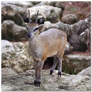 Пять неожиданных способностей представителей мира фауны