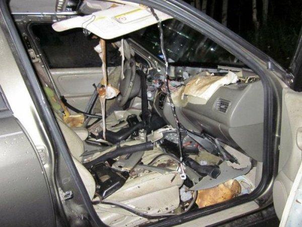 Медведи-вандалы громили машины