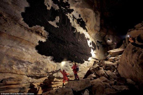 Плесень в пещере?