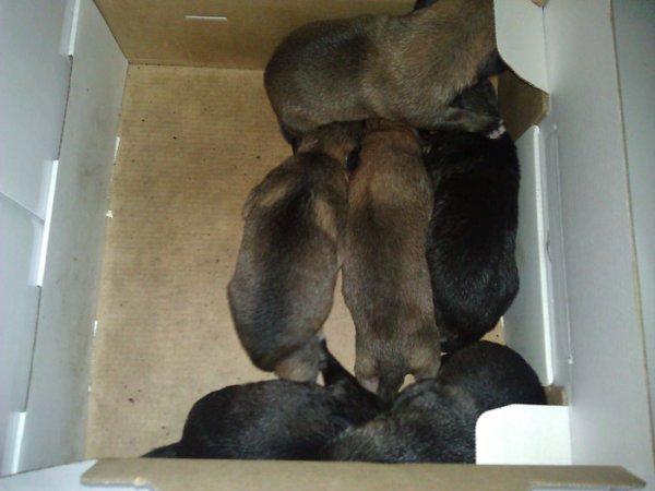 Варварство: в минской мусорке нашли новорожденных щенков