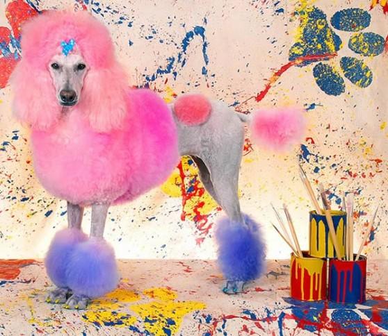 Выставка достижений собачьих парикмахеров в США
