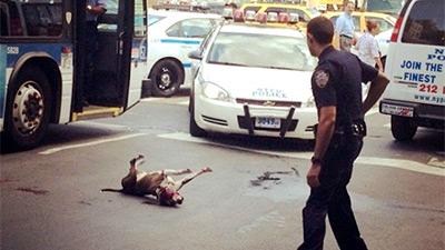 В США собака бросилась под пулю, спасая хозяина