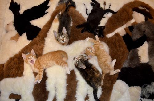 20 зверюшек, которые знают толк в камуфляже!