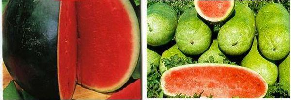 Сладкая ягодка арбуз