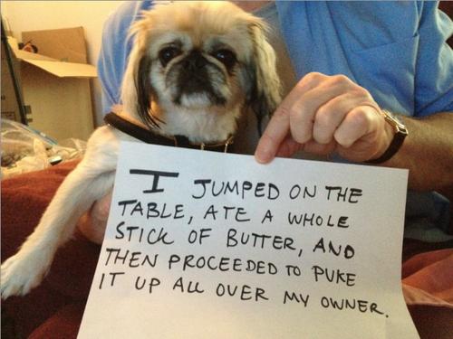 Когда собакам стыдно