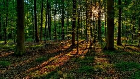 За лето в лесах Беларуси пропали 100 человек