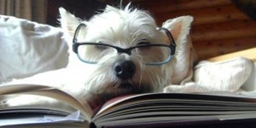 Собаки-читаки