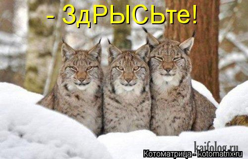 Котоматрицы-44