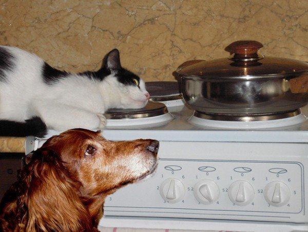 Теперь не надо часами стоять над плитой на кухне
