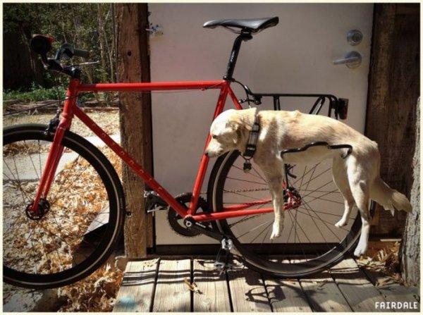 Велосипед для прогулок с собакой