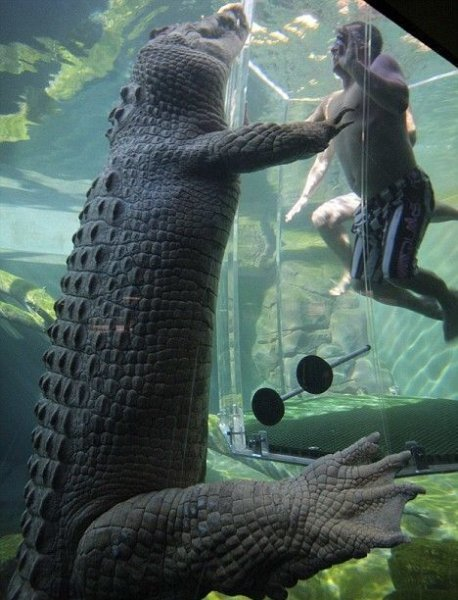 Дайвинг с крокодилами