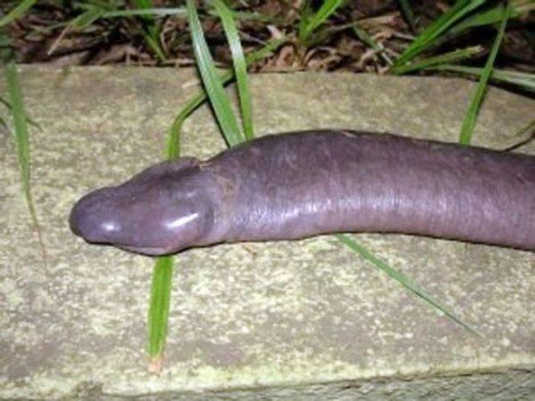 Членоподобное существо из Бразилии