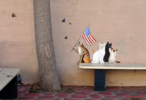 Кошачий стритарт в Аризоне