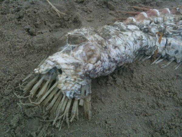 Очередной монстр из Мексики