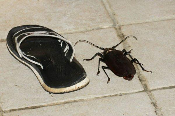 Очень большой жук