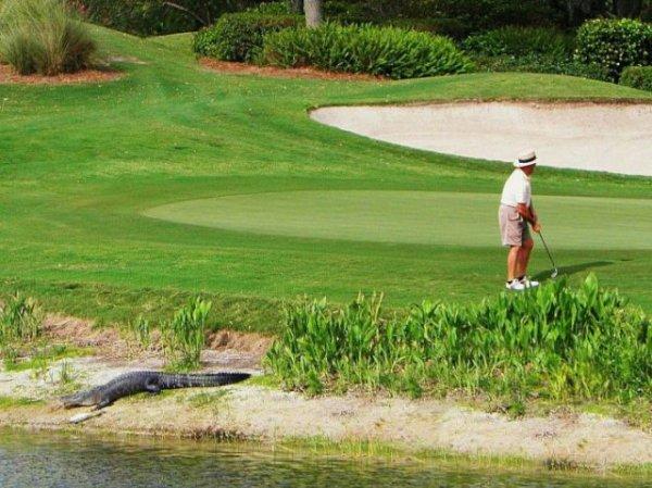 Экстремальный гольф
