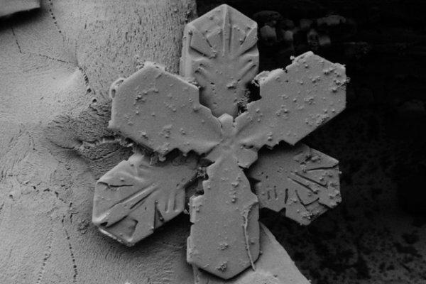 Снежинки под электронным микроскопом
