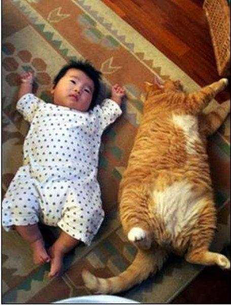 Коты и дети