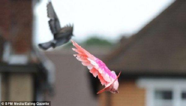 В природе существуют розовые голуби