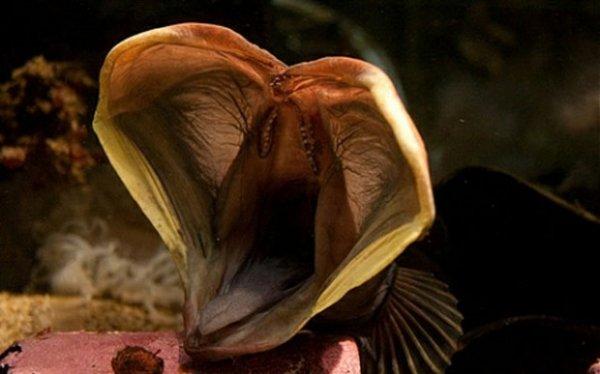 10 реальных морских существ из ваших кошмаров