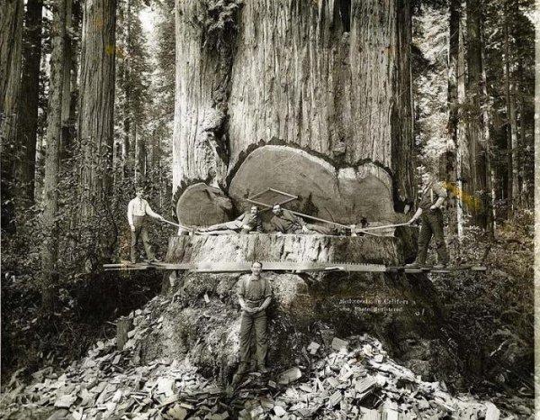 Невероятные фото лесорубов в США