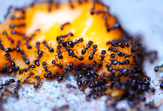 Интернет придумали не люди, а муравьи
