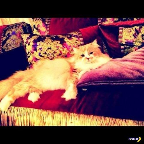Богатые коты в Инстаграме