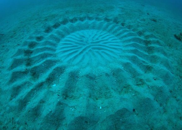 Недалеко от берегов Японии обнаружены мистические круги