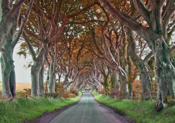 Невероятная аллея в Северной Ирландии