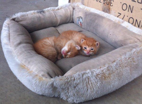 Трогательные щенки и котята