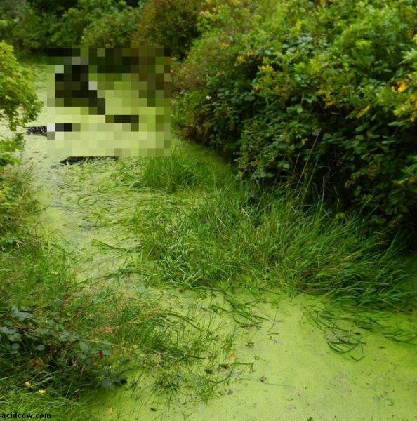 Внезапно в болоте оно...