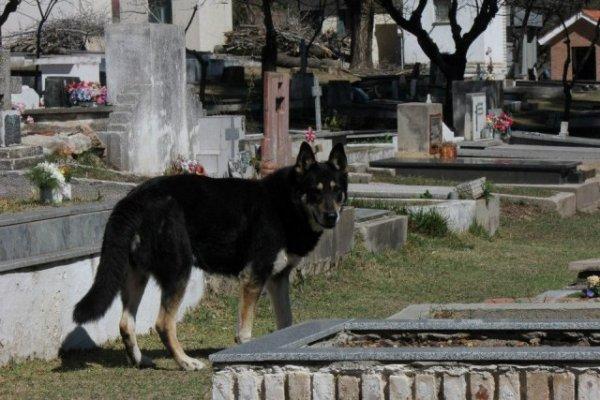 Собака 6 лет живет на могиле хозяина
