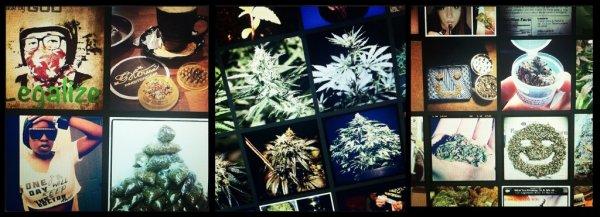 МИНЗДРАВ ПРЕДУПРЕЖДАЕТ: марихуана вызывает нарциссизм