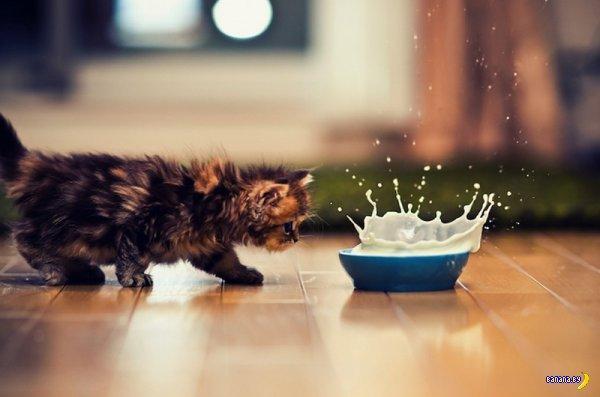 Самый милый котенок на Земле