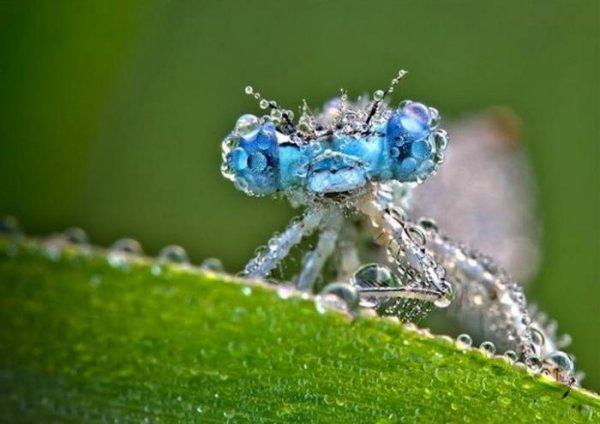 Роса и насекомые