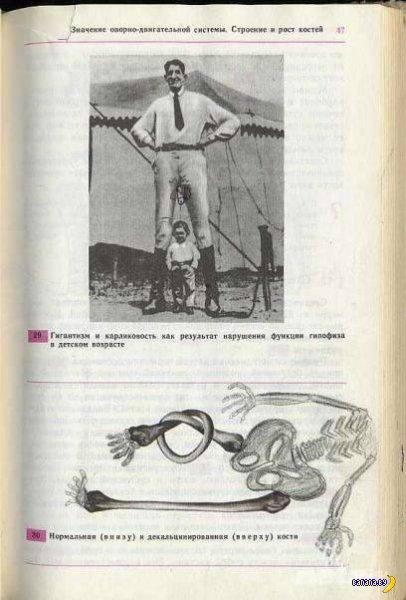 Многострадальный учебник биологии